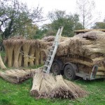 The local Norfolk reed from the marshland around the house is delivered to the garden